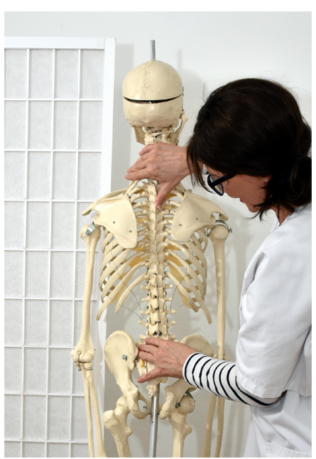 Osteopathie Skelett